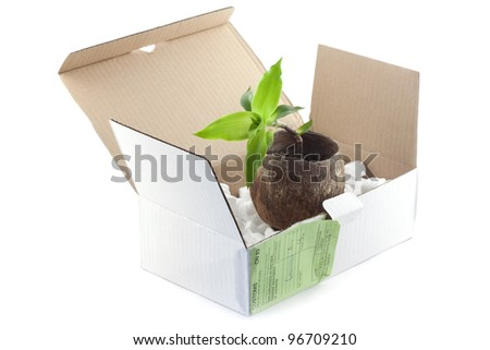 Open box with packing 'peanuts' and flowerpot isolated on white - stock photo