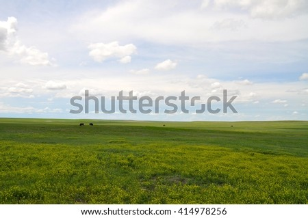 Open Field with Bison