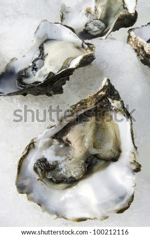 Open fresh oysters on ice in a seafood market. - stock photo