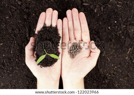 Open hands with newly sprout plant and seeds - stock photo