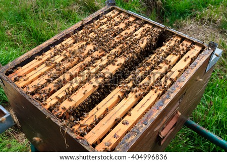 Open hive detail. Beekeeping, agriculture, rural life. - stock photo