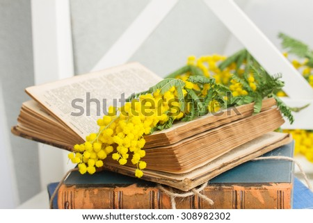 open  vintage old book  with yellow french mimosa flowers - stock photo