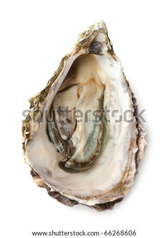 Opened fresh oyster on white background - stock photo