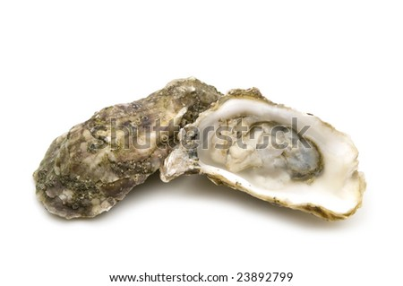 opened oysters on white background - stock photo