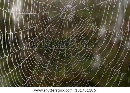 Openwork cobweb in dewdrops in autumn morning