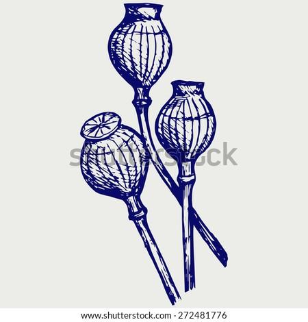 Opium poppyhead. Doodle style. Raster version - stock photo