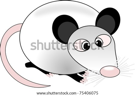 Opossum - stock photo