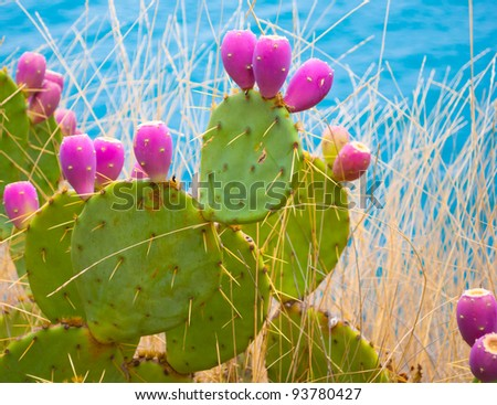 Opuntia cactus - stock photo