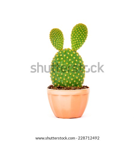 Opuntia cactus in brown pot isolated on white background  - stock photo