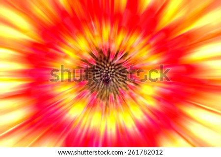 Orage and yellow Gerbera blur abstract background
