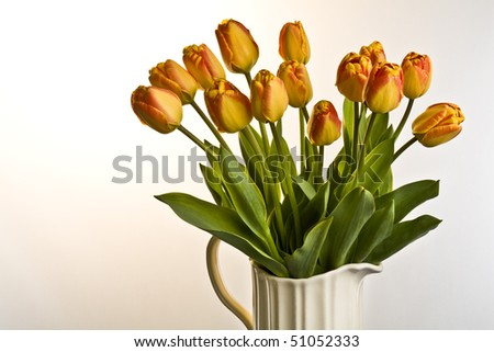 Orange and red tulips in cream jug on a plain background - stock photo
