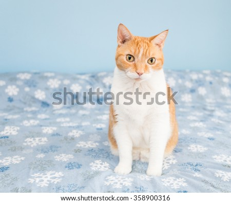 Orange and White Cat on a Blue Snowflake Background - stock photo