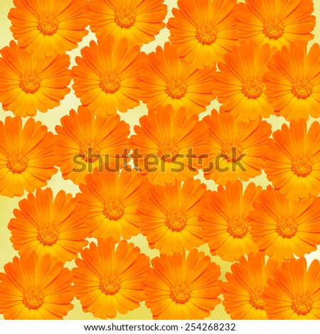 Orange and yellow Calendula officinalis flowers (pot marigold, ruddles, common marigold, garden marigold), texture background. - stock photo