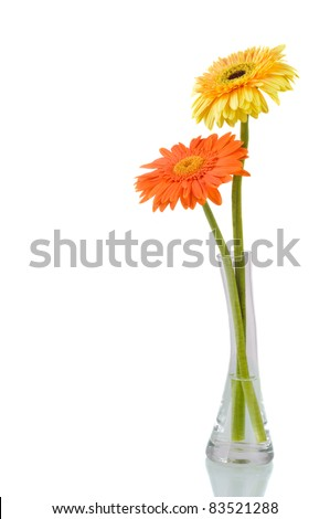 Orange and yellow  daisy-gerbera in a glass vase isolated on white with copy space. - stock photo