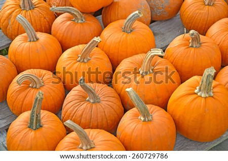 orange autumn pumpkins on wooden skids at the market - stock photo