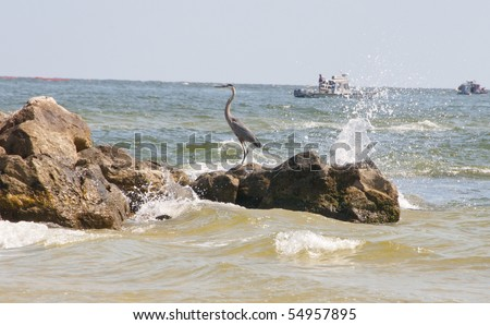 ORANGE BEACH, AL - JUNE 10: A blue heron perches on boulders bespeckled with oil droplets at Perdido Pass, AL on June 10, 2010 as the BP oil slick moves ashore. - stock photo
