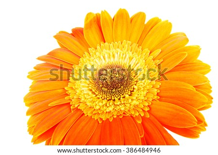 Orange bright spring gerbera flowers isolated on white background - stock photo