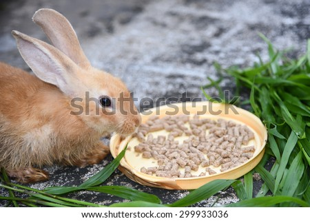 Orange brown rabbit is eating rabbit feed and grass. Professional dry pet food spread out in a plate with green grass - stock photo