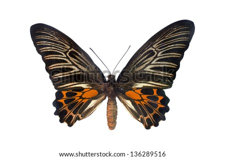 Orange Butterfly. Isolated on white background. - stock photo