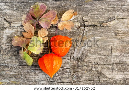 Orange cape gooseberry on a wooden background