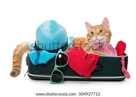 Orange cat lay on a suitcase full assembled for a holiday trip, isolated on white - stock photo