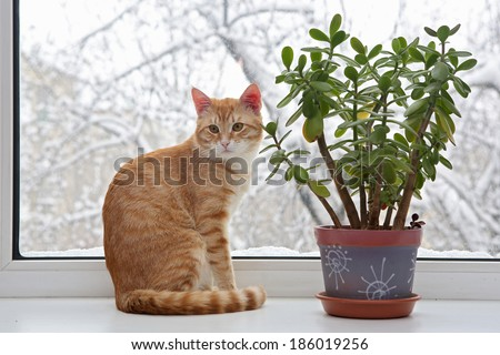 Orange cat sitting in the window, through the glass winter and snow - stock photo