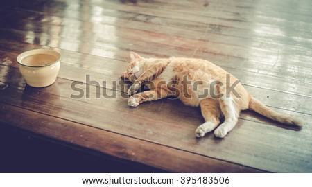 Orange cat sleeping,vintage - stock photo