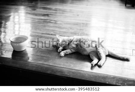 Orange cat sleeping,vintage,black and white - stock photo