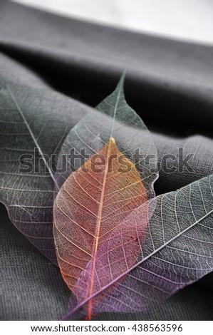 Orange color skeleton leaf on gray fabric background - stock photo