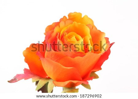 Orange colorful textile rose closeup