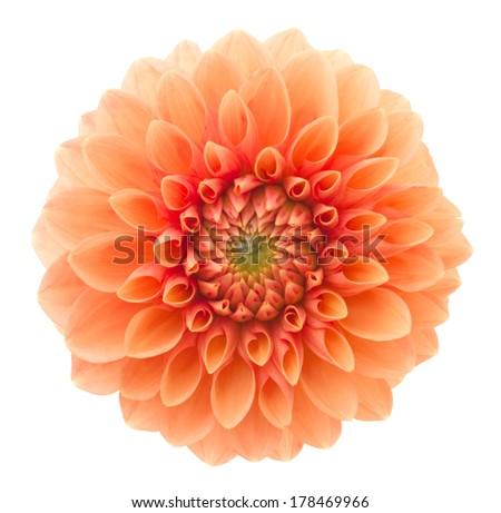 Orange dahlia. Deep focus. No dust. No pollen. Please watch more flower heads in my portfolio.  - stock photo