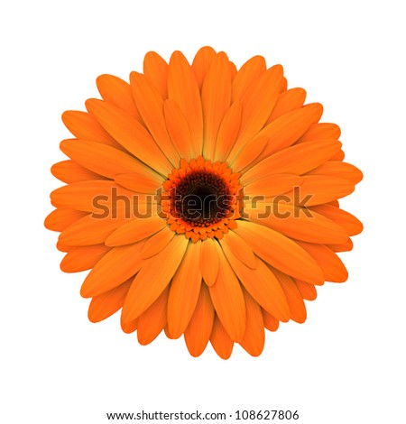 Orange daisy flower isolated on white background - 3d render - stock photo