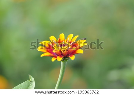 orange daisy on green grass background - stock photo