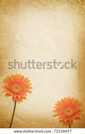 Orange flower and old paper for text and background - stock photo