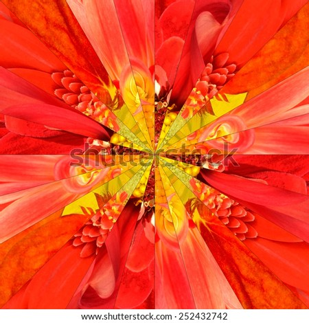 Orange Flower Center Symmetric Collage Made of Collection of Various Wildflowers. Pieces are Seamlessly Divided into 24 Symmetric pieces. - stock photo