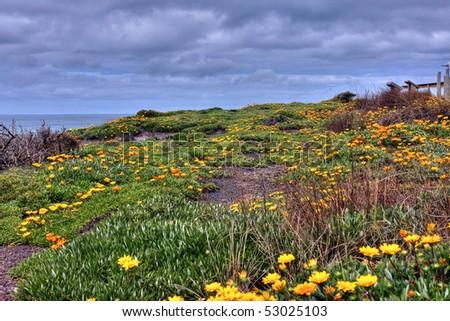 orange flowers along an ocean drive - stock photo