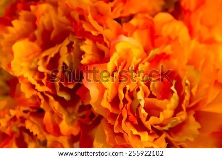 Orange Flower Stock Photos, Royalty-Free Images & Vectors