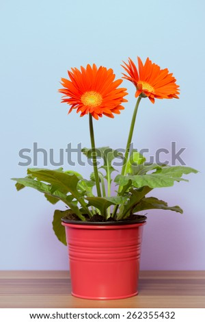 orange flowers planted in flower pot - stock photo