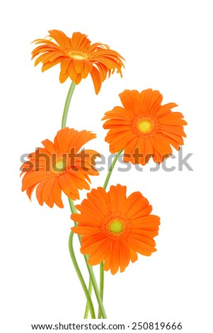 Orange gerber flowers bouquet on white  - stock photo