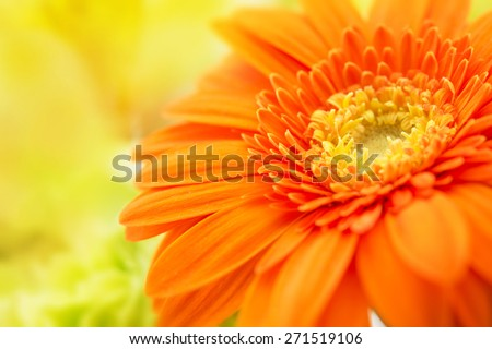 Orange gerbera close-up with yellow background. Intentionally shot with extremely shallow depth of field. - stock photo
