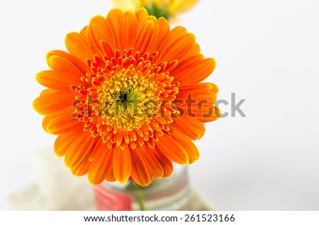 Orange gerbera flower for background. - stock photo
