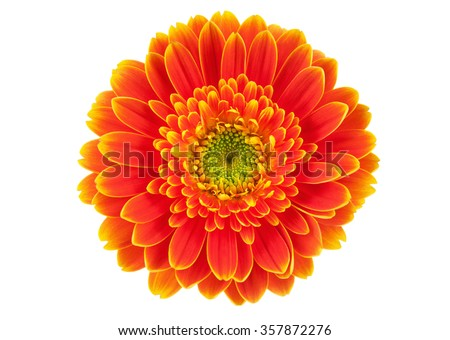 Orange gerbera flower isolated on white. - stock photo