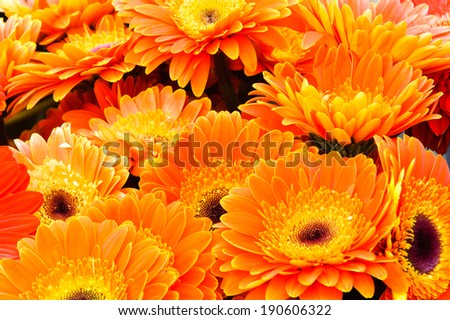 orange gerbera flowers in group