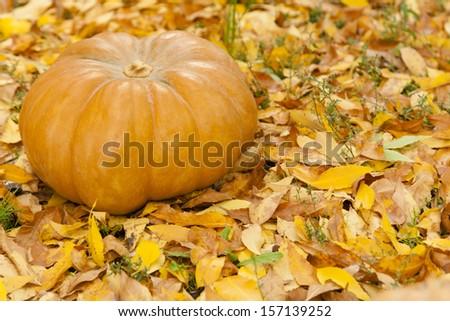 Orange halloween pumpkin on golden autumn leaves - stock photo