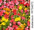 Orange impatiens and yellow pansies in a summer flower garden. - stock photo