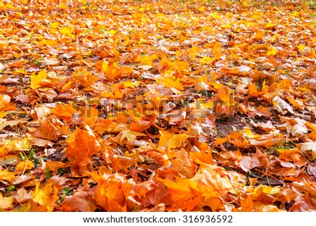 Orange leaves in autumn park. Fall seasonal background - stock photo