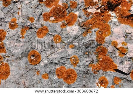 Orange lichen on limestone - stock photo