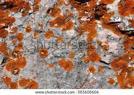 Orange lichen texture pattern - stock photo