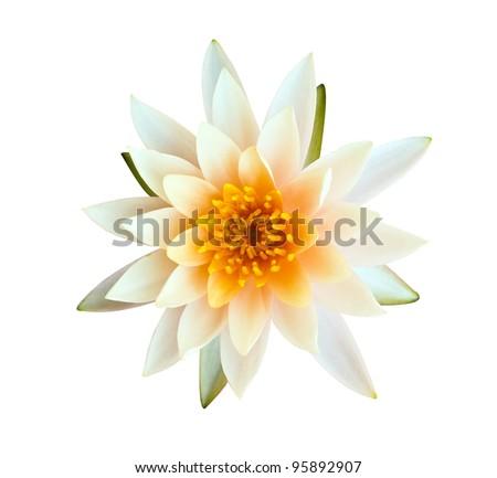 Orange lotus isolated on white background - stock photo