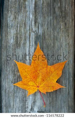 orange maple leaf on wooden surface - stock photo